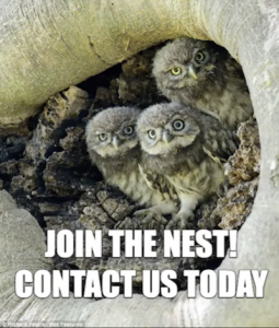 nest of baby owls