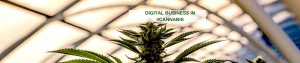 Digital Business in Cannabis